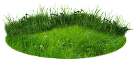 Grama verde em png