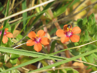 cosumnes river preserve wildflower identification