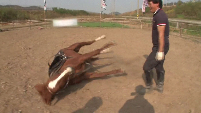 Overdramatic Horse Plays The Dead When People Try To Ride Him