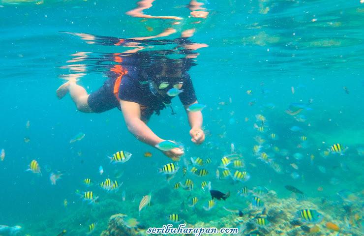snorkeling wisata pulau harapan