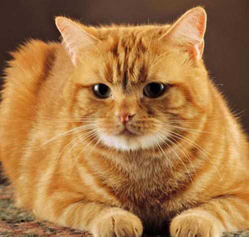 Tìm hiểu vấn đề sinh sản ở mèo