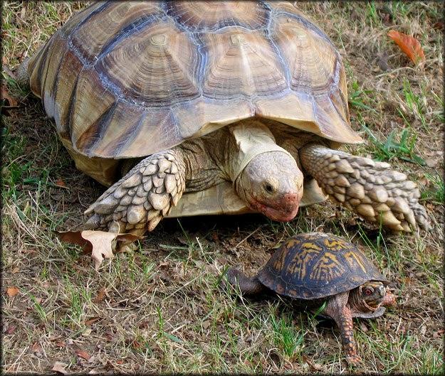Rules Of The Jungle The Box Tortoise And Hibernation