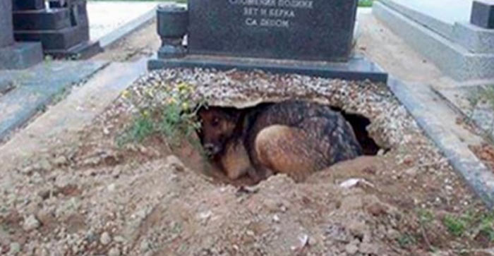 [Part 1] They thought this dog was grieving for her owner until...