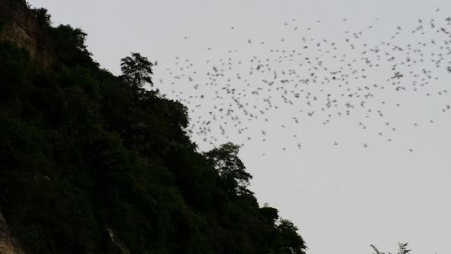 Salida de murciélagos en Battambang