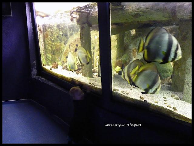 parc phoenix aquarium