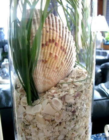 crushed shells in vase