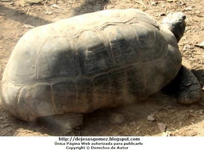 Foto al caparazón de una tortuga en el Parque de la leyendas. Foto de tortuga de Jesus Gómez