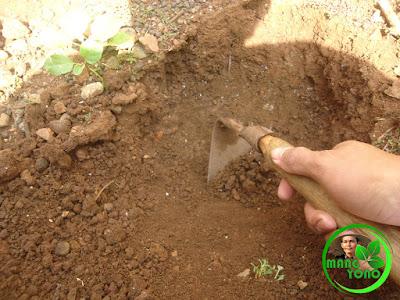 Pembuatan lubang tanam ukuran 30 cm x 30 cm x 30 cm.