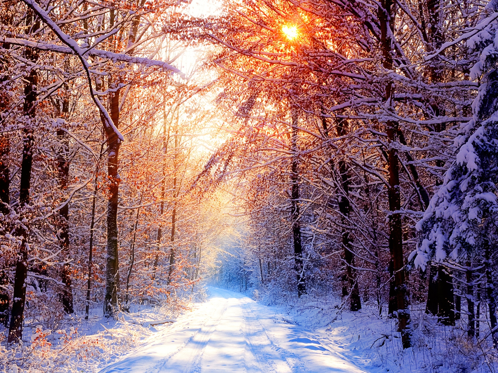 Best Wallpaper Collection: Best Winter Wallpapers