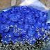 Beberapa Fakta Menarik Mengenai Bunga Mawar Biru, Lambang Cinta Pertama hingga Ambiguitas