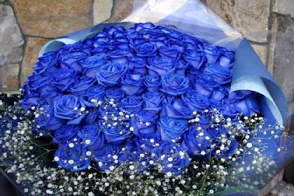 89 Foto Gambar Bunga Mawar Biru Asli Paling Keren