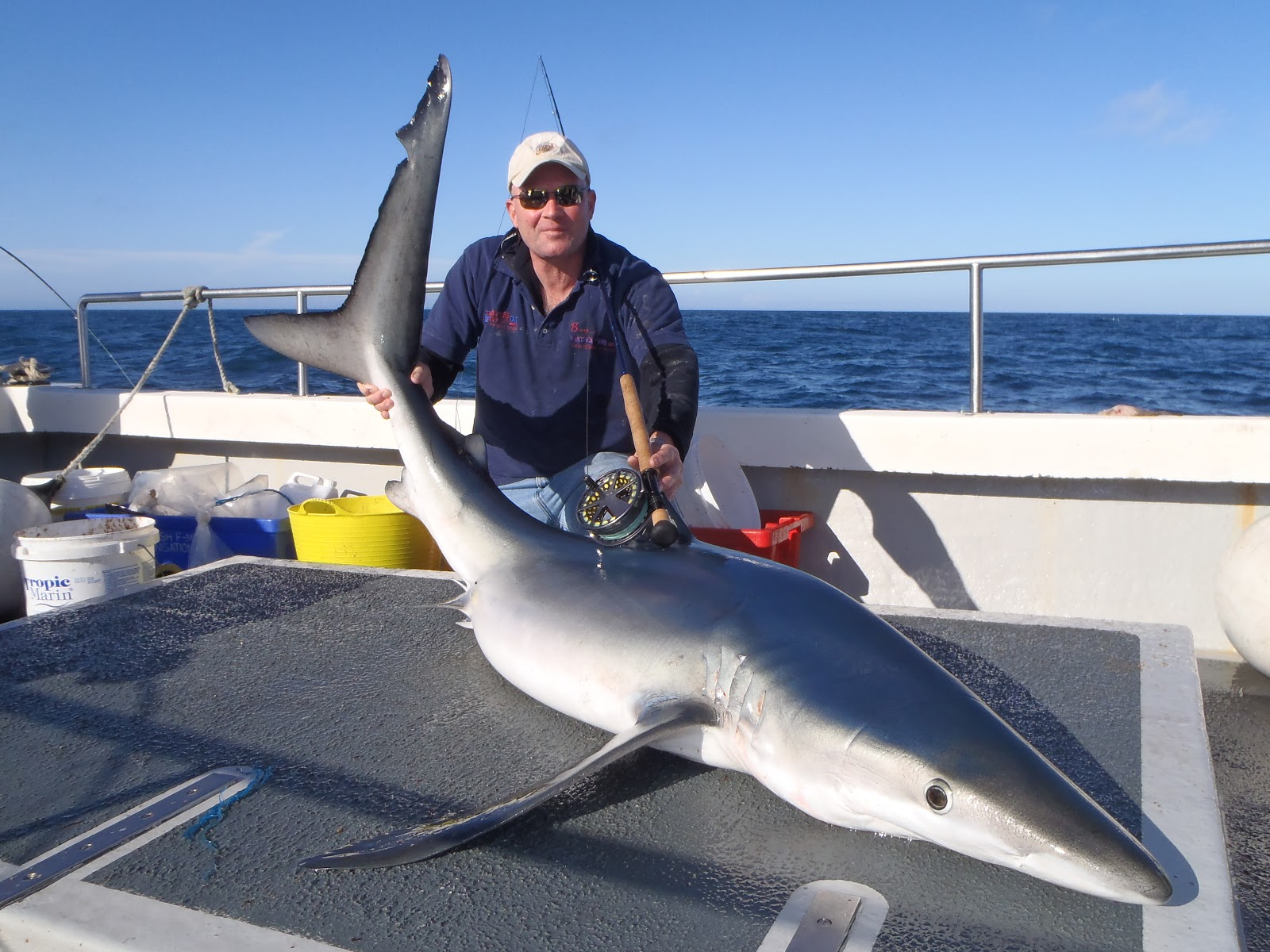 Blue Shark With Fly