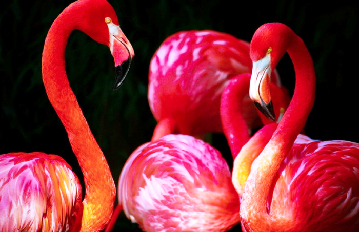 Sage advice can come from the strangest places - here's some from a flamingo...