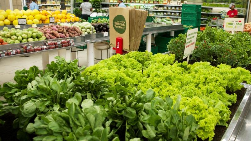 Hortinha fresca no supermercado Zona Sul