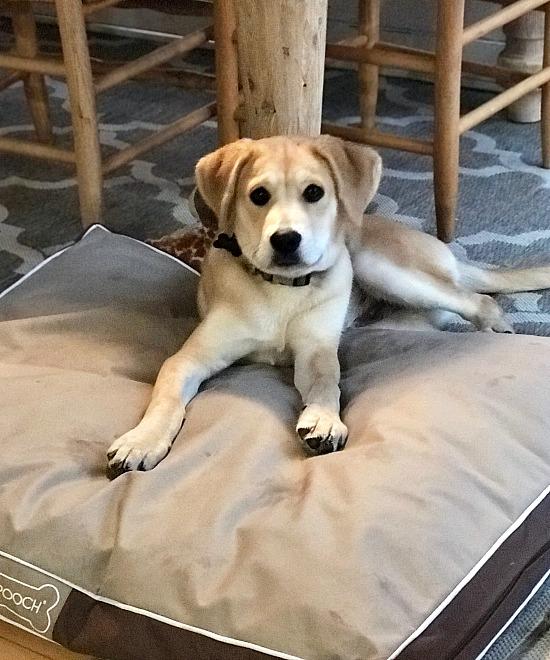 Finn the puppy. Homeroad.net