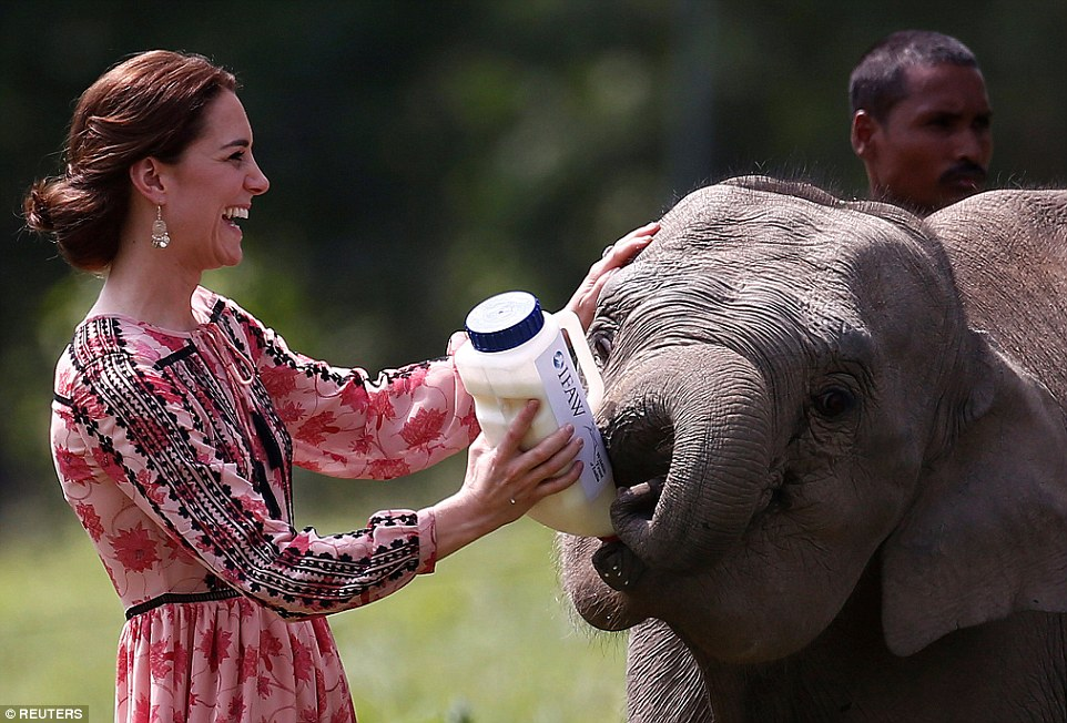 Kate Middleton glows as she feeds elephant calf at animal sanctuary in India