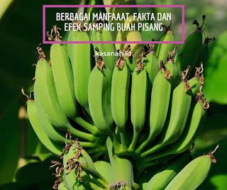 Buah pisang yang belum matang