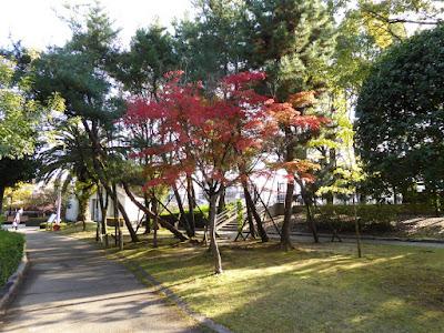 秋の市民の森(鏡伝池緑地) 郷土の森のモミジ 紅葉