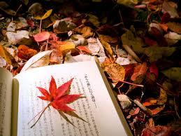 folhas de outono , livros , dicas de leitura