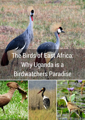 The Birds of East Africa: Why Uganda is a Birdwatchers Paradise