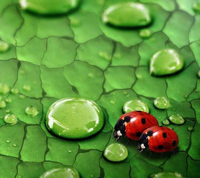 cute bugs macro mobile resolution hd wallpaper
