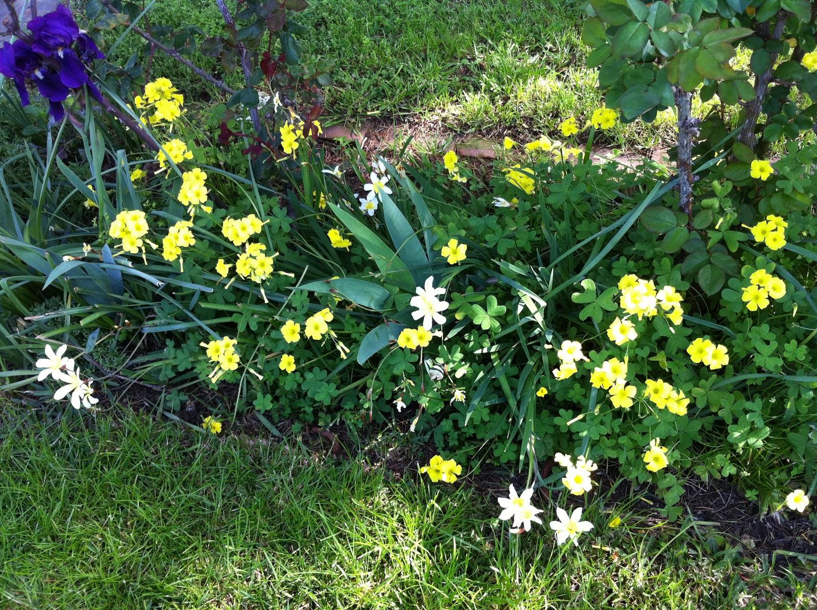 Week 7 Flowering