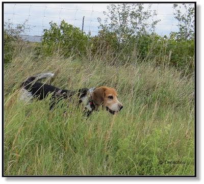 Hundeblog, mit Hund unterwegs