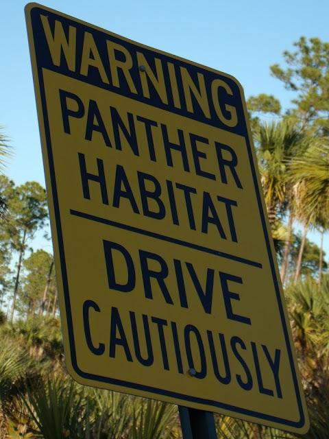 Alerta sobre la presencia de panteras en el camino