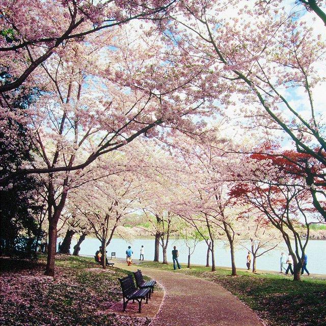 Holly's Hill: West Potomac Park, Washington DC