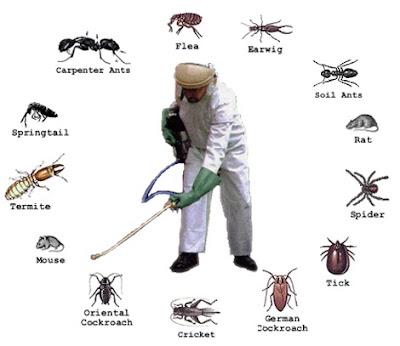 ما يُميزنا في شركة مكافحة حشرات بالمدينة المنورة