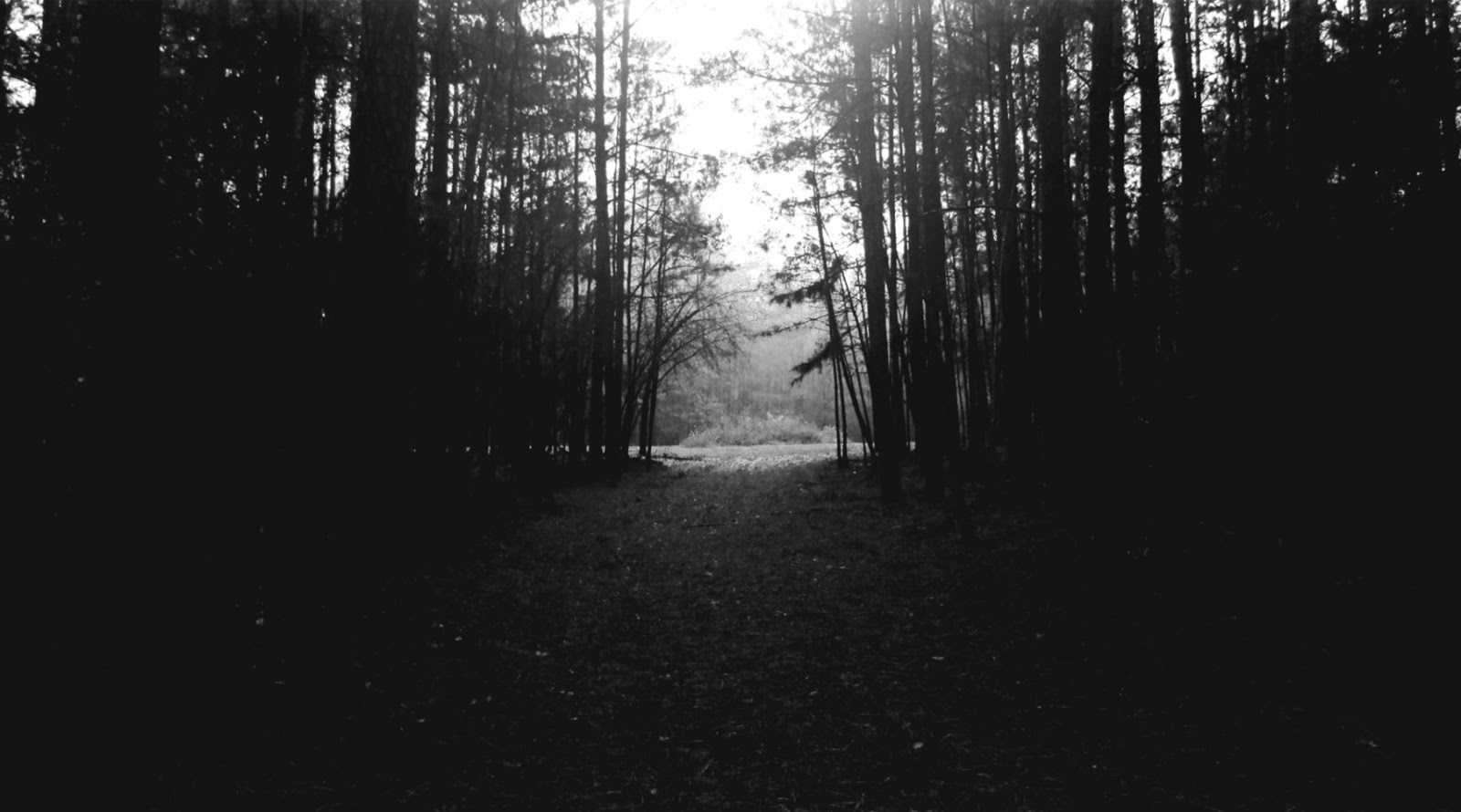 Forest Wallpaper Black And White Wallpapers Master