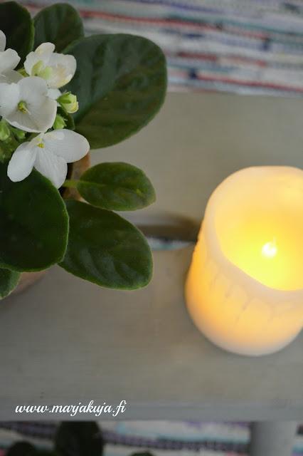 saintpaulia kukka kynttila