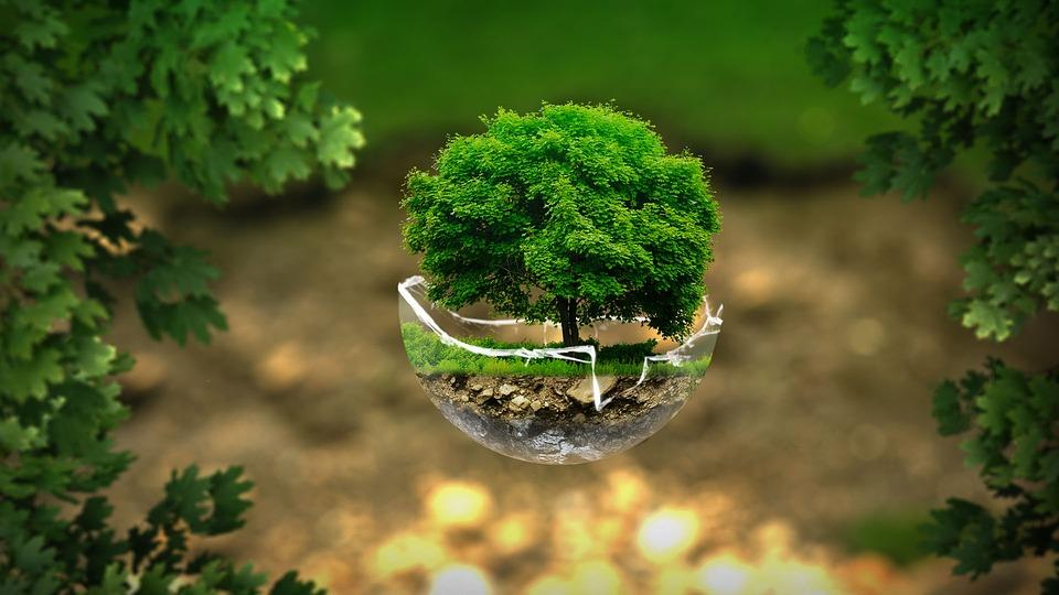 conserve our environment