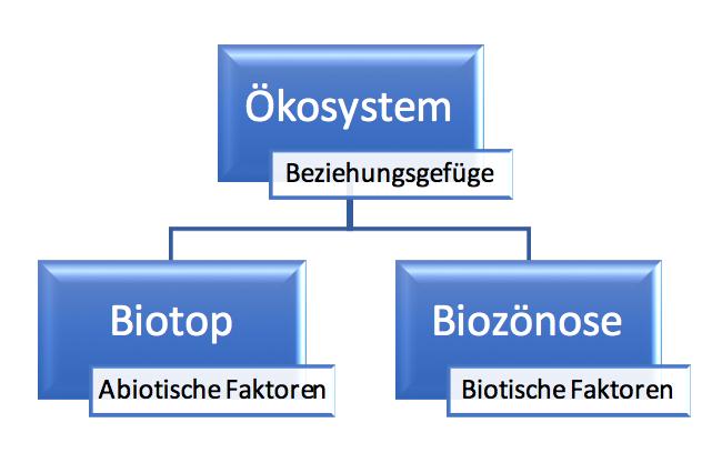 Botanik Online Okologie Analyse Von Okosystemen 2