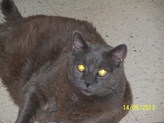 Diabetic Cat Chubby Earned His Name