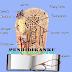 Pengertian Tulang Keras (Osteon) Ciri dan Jenis nya