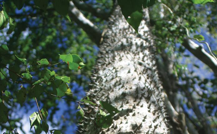 Pohon Buah Unik