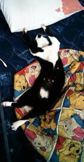 Puciy tidur seenaknya di atas kasurku, terus aku tidur di mana?