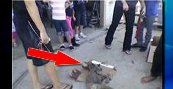 Chupa-cabra ataca novamente - aparições na Califórnia geram polêmica - Capa