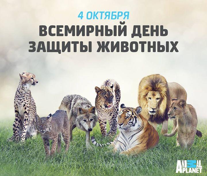 Картинки день животных для детей, добрый день картинки