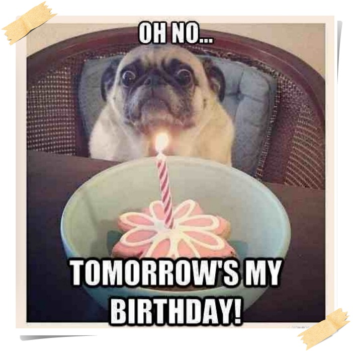 Funny Happy Birthday Meme Faces With Captions | Happy ...
