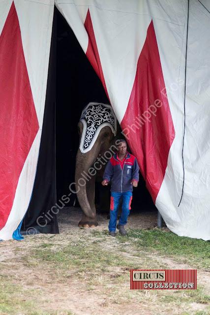 Sortie de piste pour les éléphants du Cirque Knie