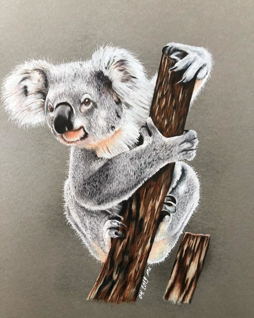 12-Koala-Eichenberger-Rodriguez-Colored-Wildlife-Drawings-www-designstack-co