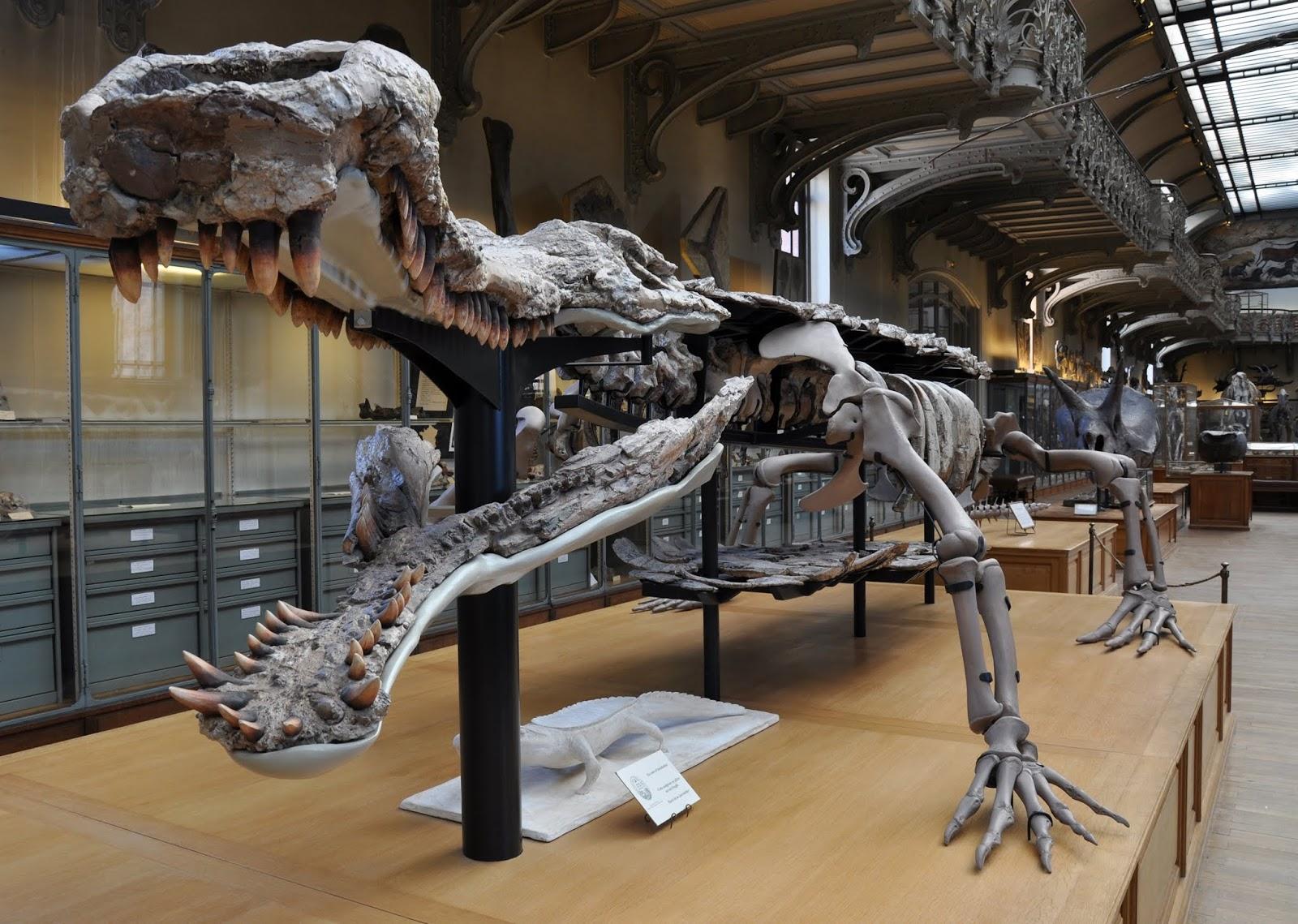 ये हे दुनिया का सबसे बड़ा मगरमच्छ जो डायनासोर को भी खा जाते थे | Sarcosuchus: Largest Prehistoric Crocodile Ever
