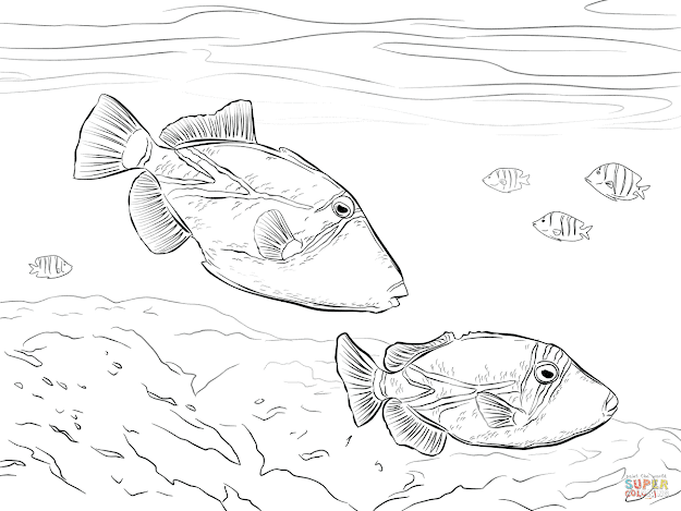 Click The Reef Triggerfish Coloring Pages To View Printable Version Or Color  It Online Patible With Ipad And Android Tablets