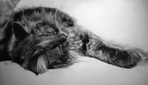 06-Hyper-realistic-Cats-Pencil-Drawings-Hong-Kong-Artist-Paul-Lung-aka-paullung-www-designstack-co