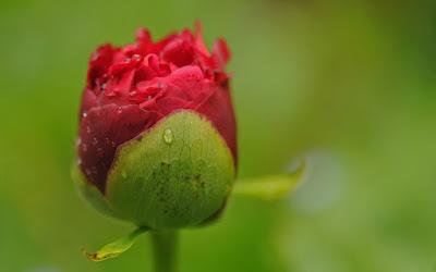 صور زهرة جميلة