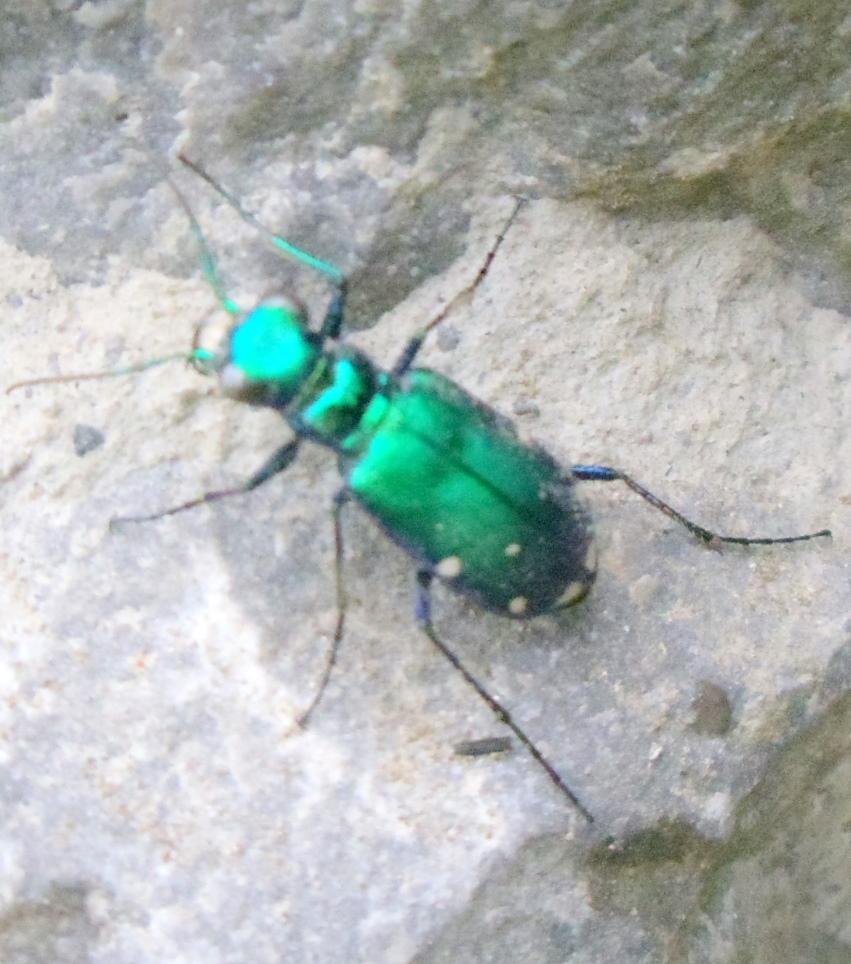 Shiny Green Bee...