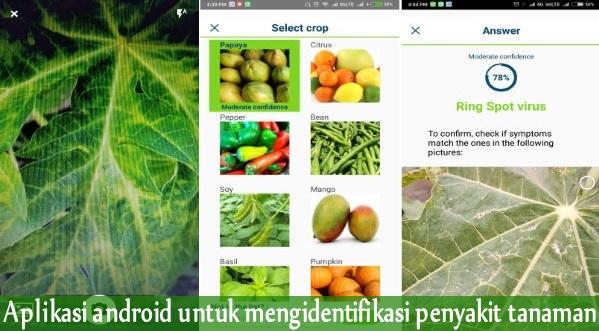 Mengidentifikasi penyakit tanaman dengan aplikasi android Mengidentifikasi penyakit tanaman dengan aplikasi android