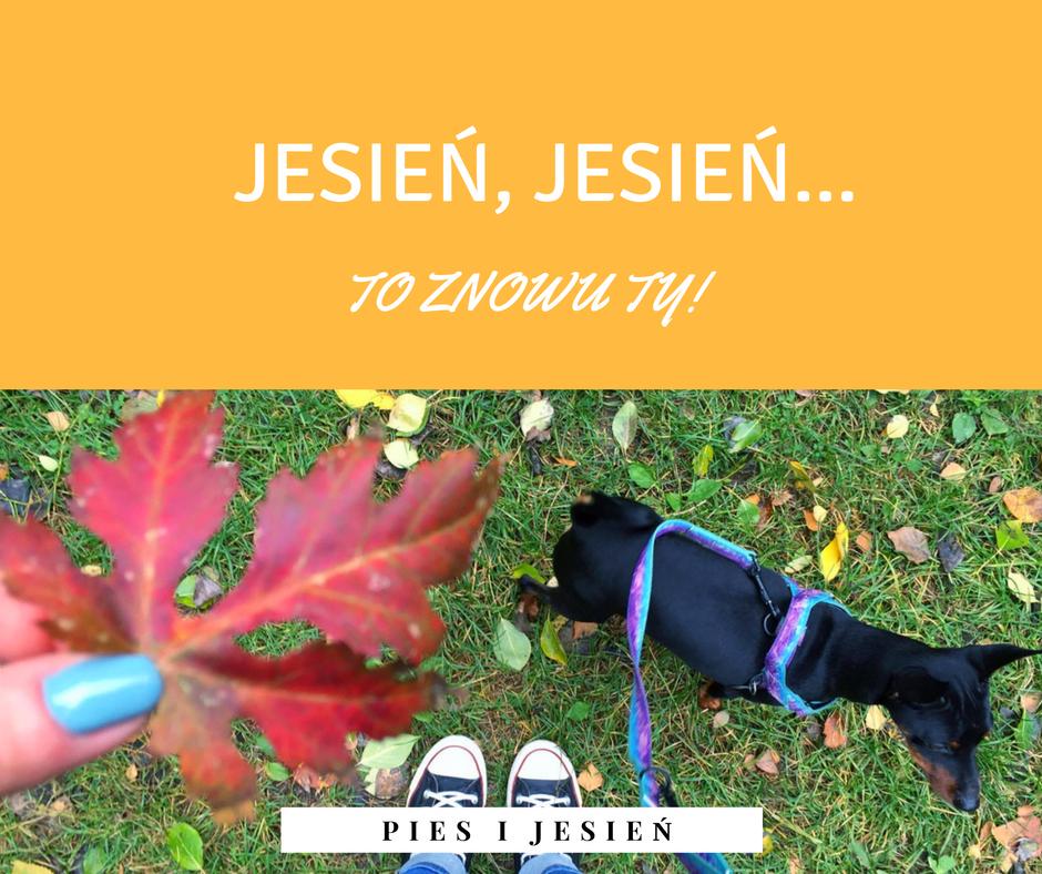 Jak dbać o psa jesienią i w zimie?